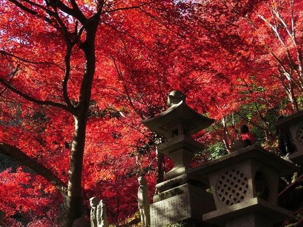 IMG_6376紅葉.JPG